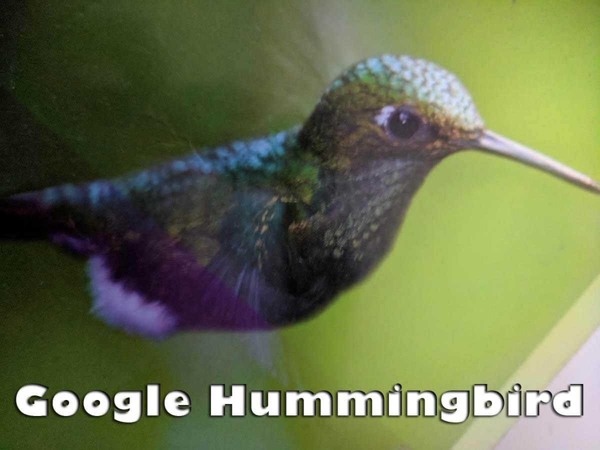 google-hummingbird-algorithmus-update